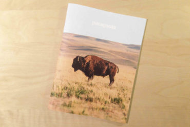 Patagonia Catalog Cover Featuring Bison on Prairie